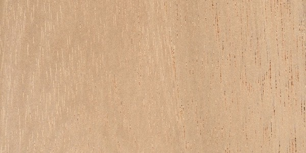 Cedar wood: characteristics and main uses