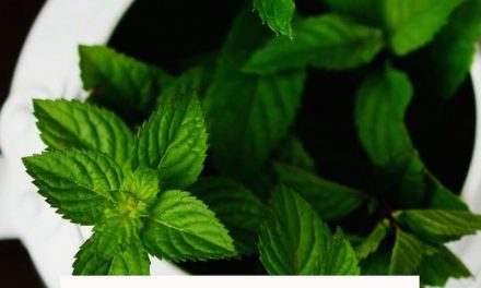 The great benefits and medicinal properties of mint