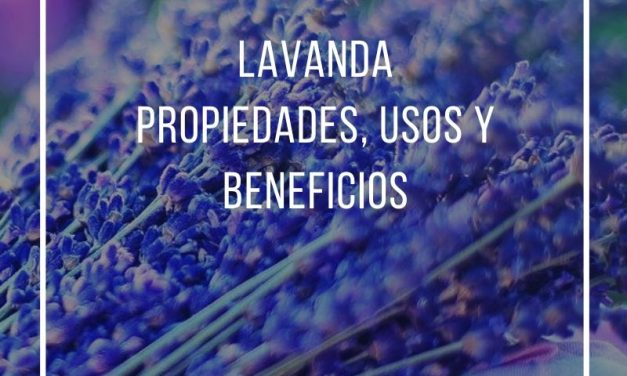 Lavender, properties, uses and benefits