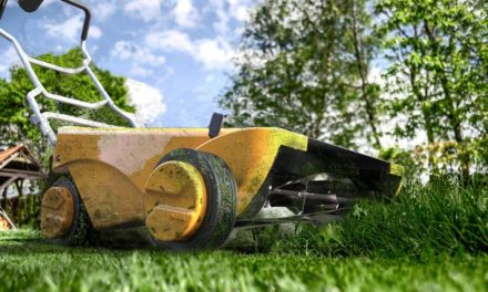 Let the sun cut your lawn with this solar mower
