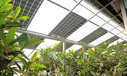 Organic photovoltaic greenhouses with the potential to reduce famine by up to 20%