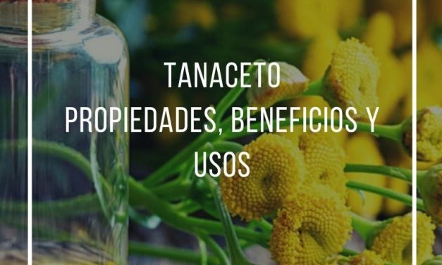 Properties, benefits and uses of tansy