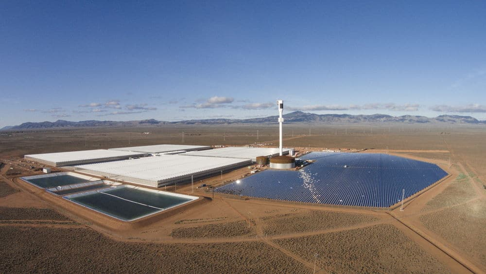 Sundrop Farms grows tomatoes with seawater and solar power in Australia