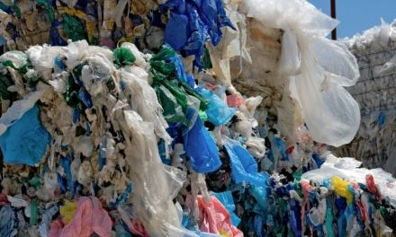 California officially becomes first state to ban plastic bags