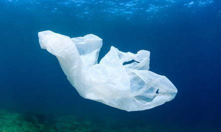 New York Governor announces law banning single-use plastic bags statewide