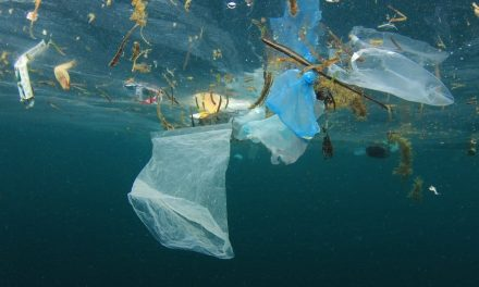 Single-use plastics have their days numbered in Costa Rica