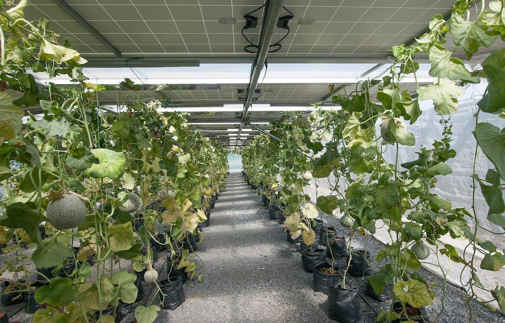 Solar greenhouses, the future of agrovoltaic energy