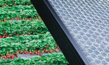 """Insolight: new """"bubble"""" solar panels for an efficiency of 29%"""