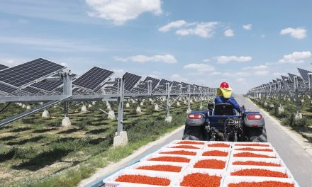 Huawei promotes the world's largest agro-photovoltaic project