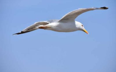 More efficient mini wind turbine inspired by seagull wings