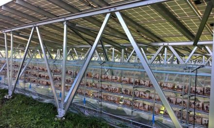 Solar farms in Japan, in addition to producing energy, will now also produce mushrooms