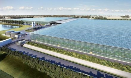 Tesla batteries and wind power for the world's first self-sufficient hydroponic farm in Australia